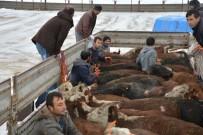 KURA ÇEKİMİ - Genç Çiftçilere Hayvan Dağıtımı