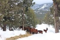 Yılkı Atları Ve Sokak Hayvanları İçin Doğaya Yem Bırakıldı