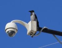 MILLI PARKLAR GENEL MÜDÜRLÜĞÜ - Türkiye Kuş Türü Listesine Yeni Bir Tür Eklendi