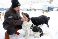 SOĞUK HAVA DEPOSU - Büyükçekmece Belediyesi Binlerce Sokak Hayvanını Sağlığına Kavuşturdu