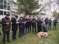 HASAN AKGÜN - Büyükçekmece'de Polisler İçin Kurban Kesildi