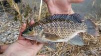BILGE KAĞAN - Ceyhan Nehri'nde Balık Ölümleri İnceleniyor