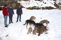 Hakkari Belediyesi Sokak Hayvanlarına Sahip Çıktı