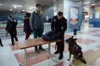 K-9 - Metroda K-9 Köpekleriyle Güvenlik