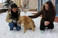 KIZ ARKADAŞ - Aç Köpeği Elleri İle Beslediler