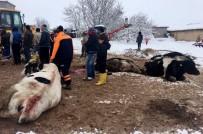 Aksaray'da Çatısı Kar Ağırlığına Dayanamayan 2 Mandıra Çöktü
