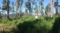 EROZYON - Koyulhisar'da Ağaçlandırma Çalışmaları