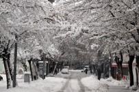 Nevşehir'de Yoğun Kar Ağaçların Dallarını Kırdı