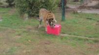 FARUK YALÇIN HAYVANAT BAHÇESİ - Hayvanat Bahçesi Sakinlerine Yılbaşı Hediyesi