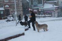 HAYVAN SEVERLER - Tosya'da Aç Kalan Sokak Köpeklerini Vatandaşlar Besledi