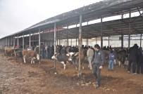Gölbaşı Belediyesi Canlı Hayvan Pazarı Hizmete Girdi