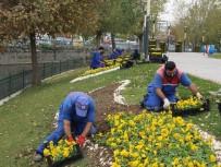 KAĞITHANE BELEDİYESİ - Kağıthane'yi Rengarenk Kış Çiçekleri Süslüyor