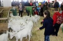 MUSTAFA AYDıN - Küpesini Gören Çoban Olduğuna İnanmıyor