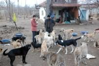 YENIYURT - Bahçesinde 100'E Yakın Sokak Köpeğine Bakıyor