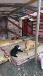SOSYAL SORUMLULUK - Gazi Üniversitesi Öğrencilerinden Sokak Hayvanlarına Yuva
