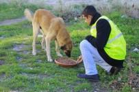 Kırklareli'nde Sokak Hayvanlarına Mama Bırakıldı