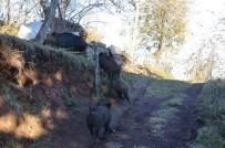 Aç Kalan Yaban Domuzları Köye İndi