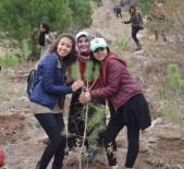 MUĞLA ORMAN BÖLGE MÜDÜRÜ - Aydın KYK Ormanları Yeşeriyor