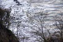 KUŞ BAKıŞı - Karabatak Kuşlarının İlginç Görüntüleri
