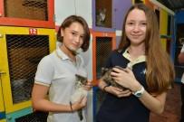 SOKAK HAYVANI - Konyaaltı Barınağını 11 Ayda 2 Bin 640 Kişi Ziyaret Etti
