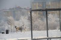 Ardahan Buz Tuttu Açıklaması Termometreler Eksi 32'Yi Gösterdi