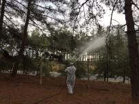 ÇAM KESE BÖCEĞİ - Ormanlarının En Büyük Düşmanı Çam Kese Böceğine İlaçlı Tedbir