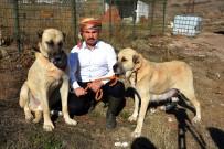 ORHAN YıLMAZ - Sınırda Mehmetçiğin Can Dostu Olacaklar