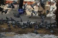 Soğuk Havada Yem Bulamayan Güvercinleri Yemliyorlar