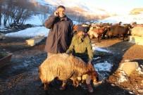 MEHMET NURİ ÇETİN - Varto'da Koyun Dağıtımı