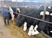 SÜT ÜRETİCİSİ - Yemin Fiyatı 53 TL'ye Çıktı, Süt Üreticisi Kara Kara Düşünmeye Başladı