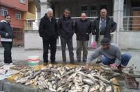 AYNALı SAZAN - Murat Balığı Tezgahtaki Yerini Aldı