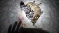YAVRU KEDİ - Soğuk Hava Sokak Hayvanlarının Ölümüne Neden Oldu