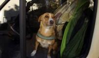 ANTALYA - 3 Gündür Minibüste Kalan Köpek Polis Ve İtfaiyeyi Alarma Geçirdi