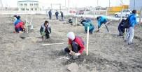 OKUL MÜDÜRÜ - Öğrenciler 150 Karaçamı Toprakla Buluşturdu