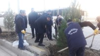 DİYARBAKIR - Silvan'ı Ağaçlandırma Projesi