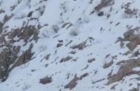 Kepenkler Açılmayınca Vatandaşlar Dağ Keçisi İzlemeye Gitti