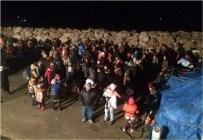 SARıKEMER - Aydın'da 262 Göçmen Yakalandı