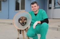 Denizli'de Sokak Köpeğine Doku Nakli Yapıldı