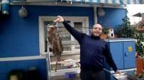 CEM KILIÇ - Mudanya'da 8 Kiloluk Fener Balığı Çıktı