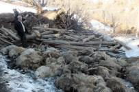 YAYLABAŞı - Ahır Çöktü, 110 Koyun Telef Oldu