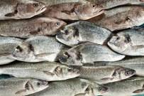 EURASIA - Dünya tanıtımlar sayesinde Türk balıklarını tüketiyor