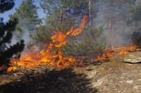 KARıNCALı - Karıncalı Dağı'nda 15 Hektar Çam Ormanı Kül Oldu
