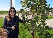 IŞIN KARACA - Işın Karaca, Manolyasıyla Ünlüler Ormanına Dahil Oldu