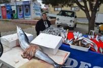 MUSTAFA TOPÇU - Denizden Çıkan Bereket Balıkçının Yüzünü Güldürdü