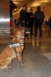 K-9 - Atatürk Havalimanı'nda Güvenlik Önlemleri Üst Düzeye Çıkarıldı