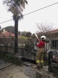 Burhaniye'de Palmiye Ağacı Yandı