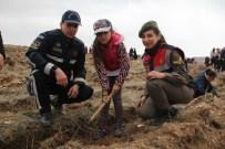 OKSİJEN KAYNAĞI - Çorum'da 18 Bin Fidan Toprakla Buluştu