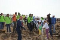 AMANOS DAĞI - Minik Eller Amanos Dağlarına 20 Bin Fidan Tohumu Ekti