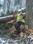 KUZÖREN - Traktörün Altında Kalan Orman İşçisi Hayatını Kaybetti