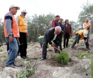 CENGİZ KAYA - Başkan Tollu, Orman Haftası'nda Fidan Dikti